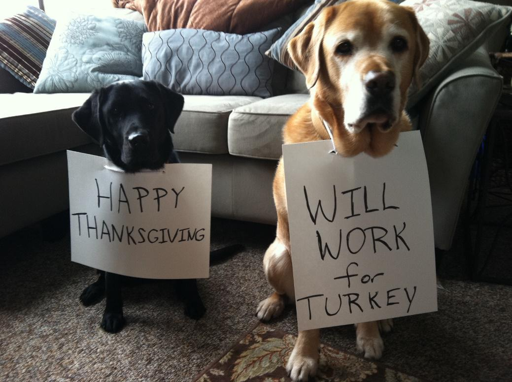 Photo from Barkpost's Thanksgiving campaign